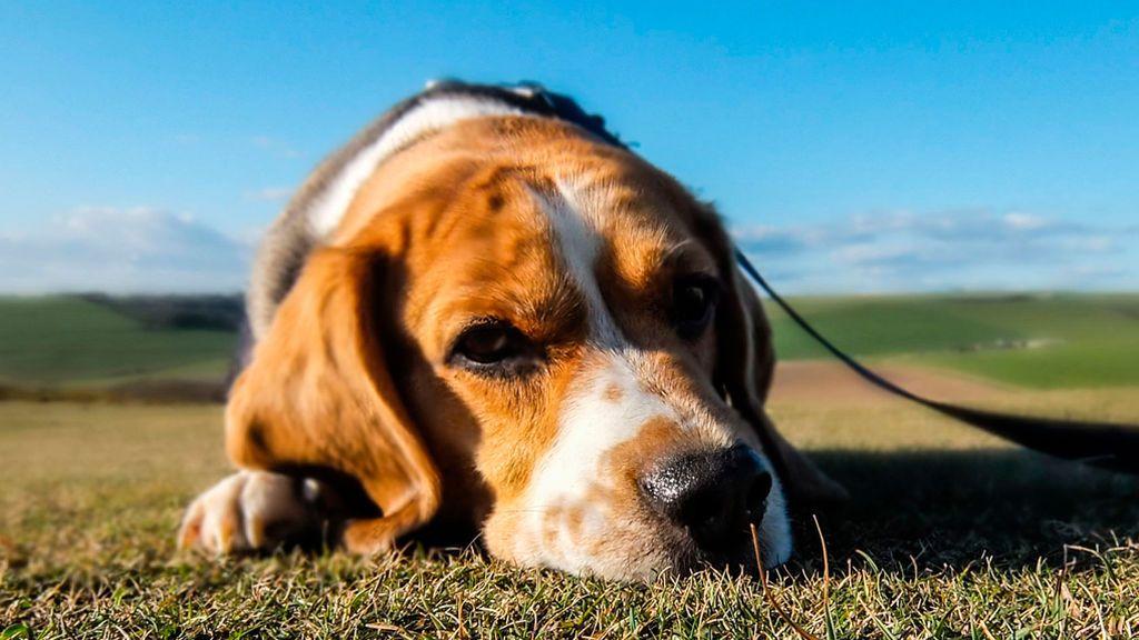 Tres preguntas que debemos hacernos antes de hacernos con una mascota