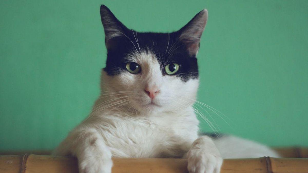 Los gatos y los perros esperan su turno para curarse. ¿habrá vacuna del coronavirus para mascotas?
