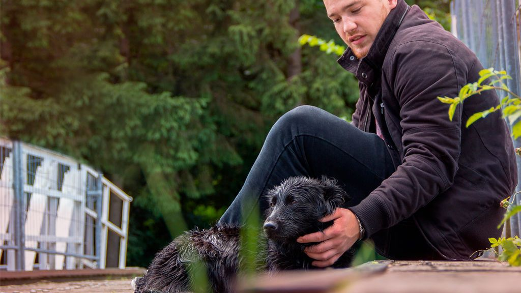 Adoptar una mascota: todo sobre el protocolo habitual de las protectoras