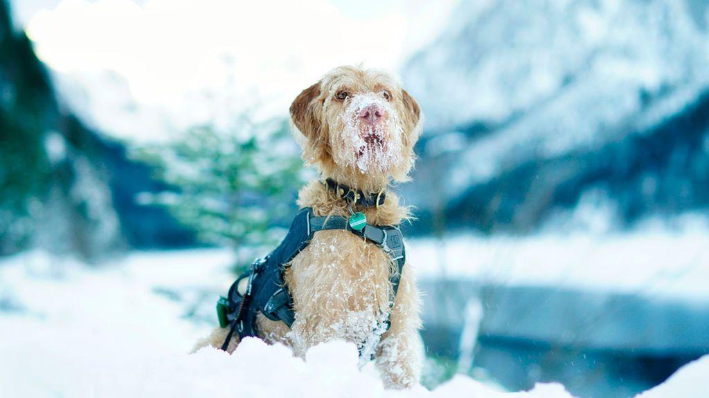 perro-en-la-nieve