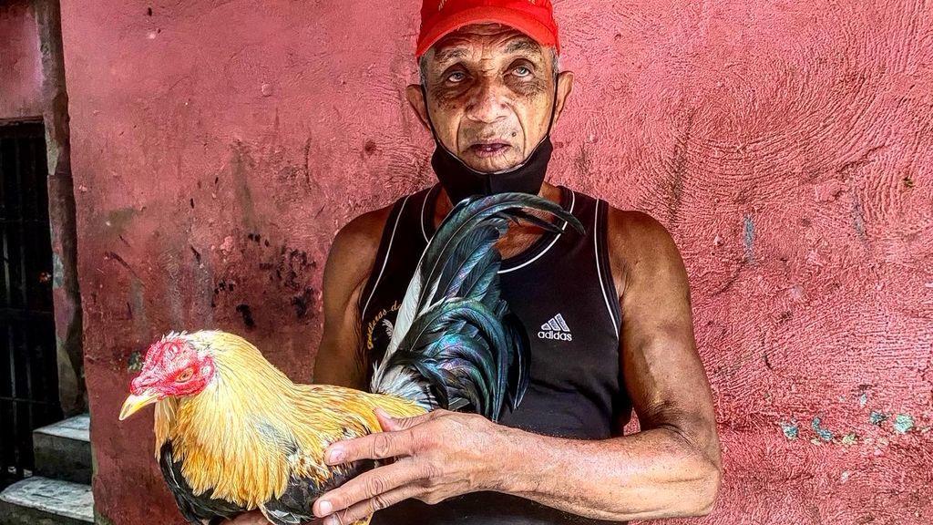 Peleas de gallos en Venezuela: de la tradición salvaje a a las apuestas millonarias