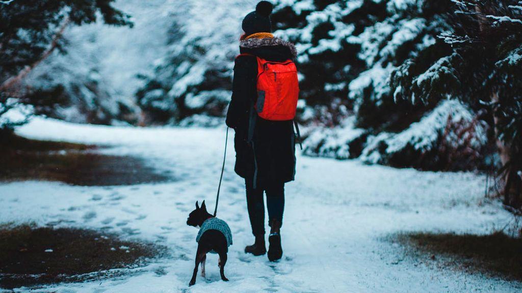 Los beneficios de pasear junto a nuestra mascota
