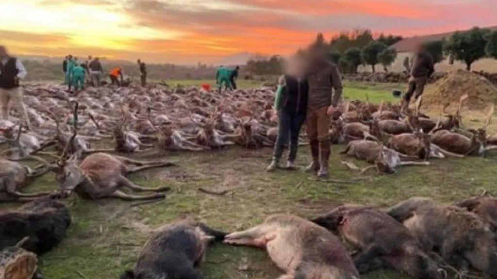 540 animales muertos: una montería protagonizada por cazadores españoles indigna a Portugal
