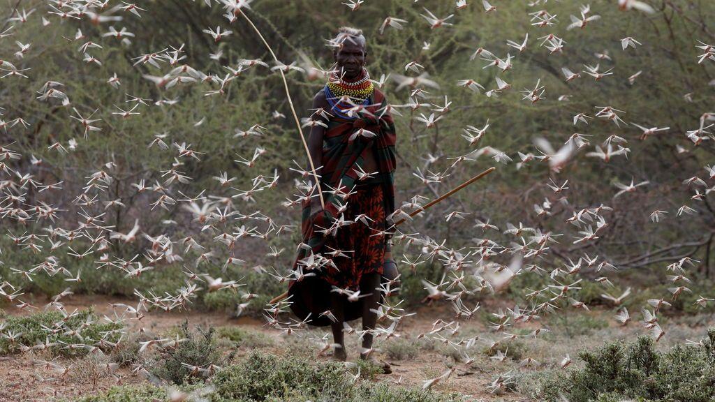 La eterna plaga de langosta del desierto: miedo a una 're-invasión' en África y Oriente Medio