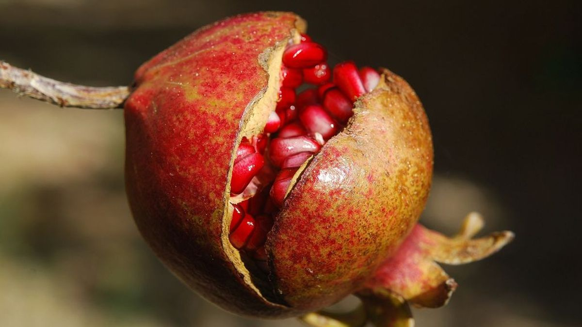 Granada: beneficios y temporada de esta fruta