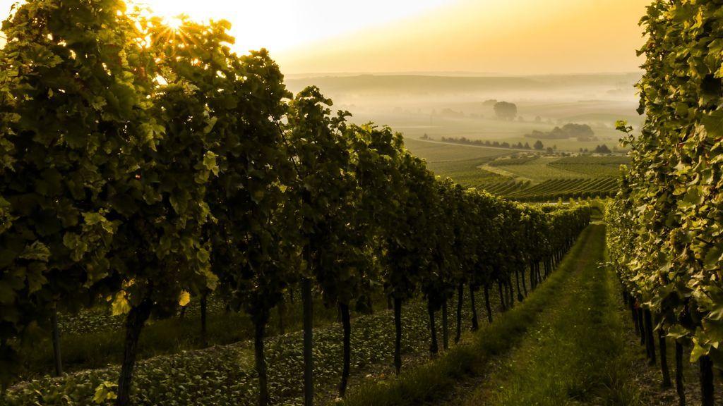 Vinos con notas y aromas de cerilla, yeso, talco y coral. ¿Sabes lo que es la mineralidad en el vino?