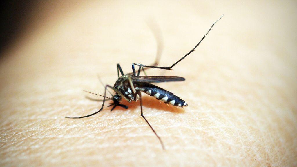 La malaria es una infección endémica en África subsahariana.