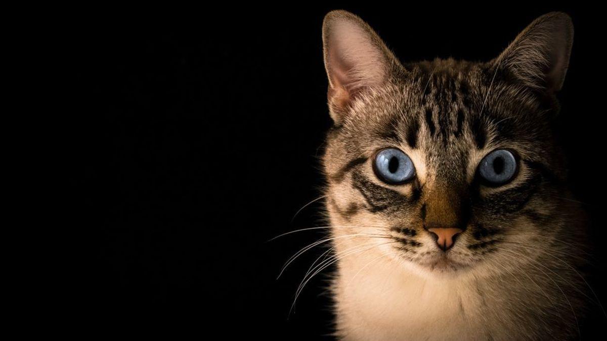 Adoptar a un gato: estos son los mandamientos que tienes que saber antes de dar el paso