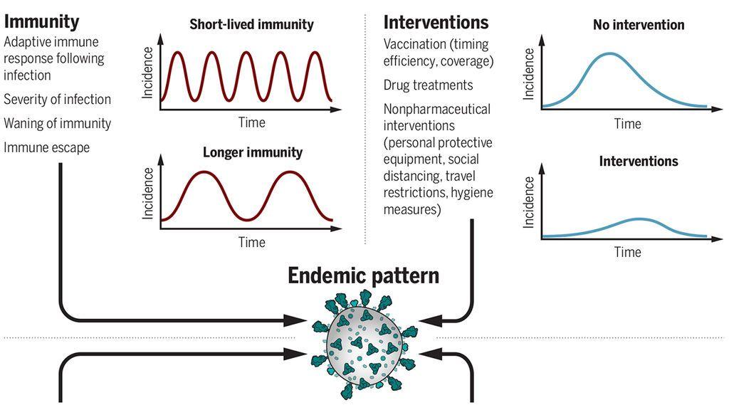 La pauta endémica de transmisión del coronavirus.