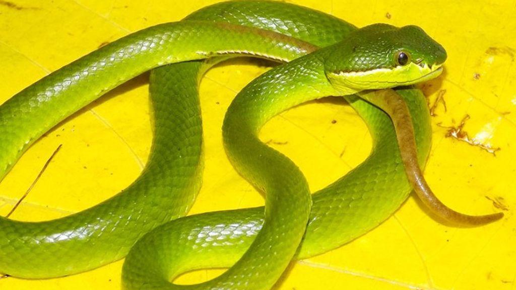 new-species-2020-viper-landscapesbs.jpg.thumb.768.768