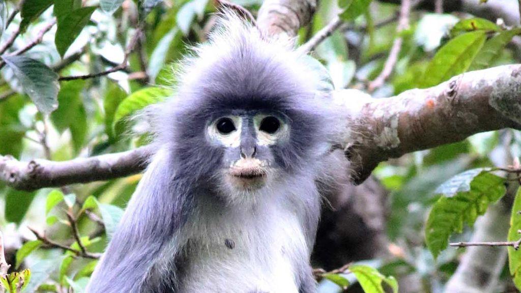 El Museo de Historia Natural londinense ha descubierto 503 nuevas especies, entre ellas un mono muy curioso