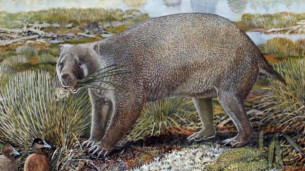 new-species-2020-wombat-hero