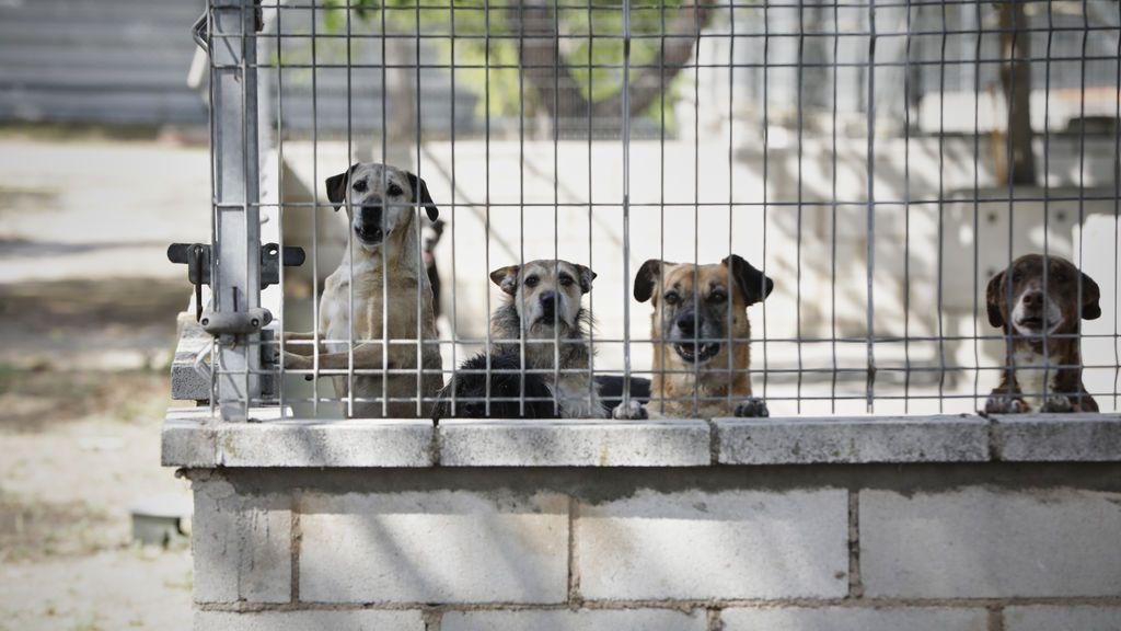 """Las protectoras de animales paralizan las adopciones en Navidad: """"Son seres vivos y no son regalos"""""""