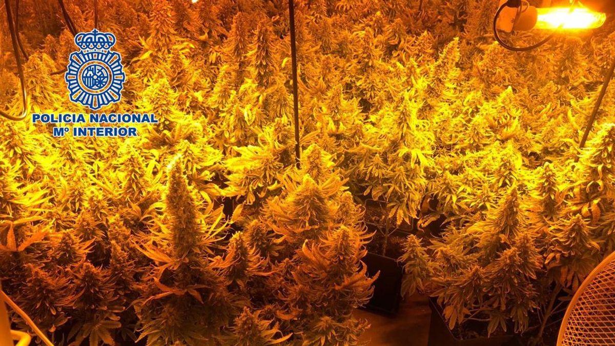 Dos detenidos por secuestrar a un hombre durante 15 días para cuidar un cultivo de marihuana