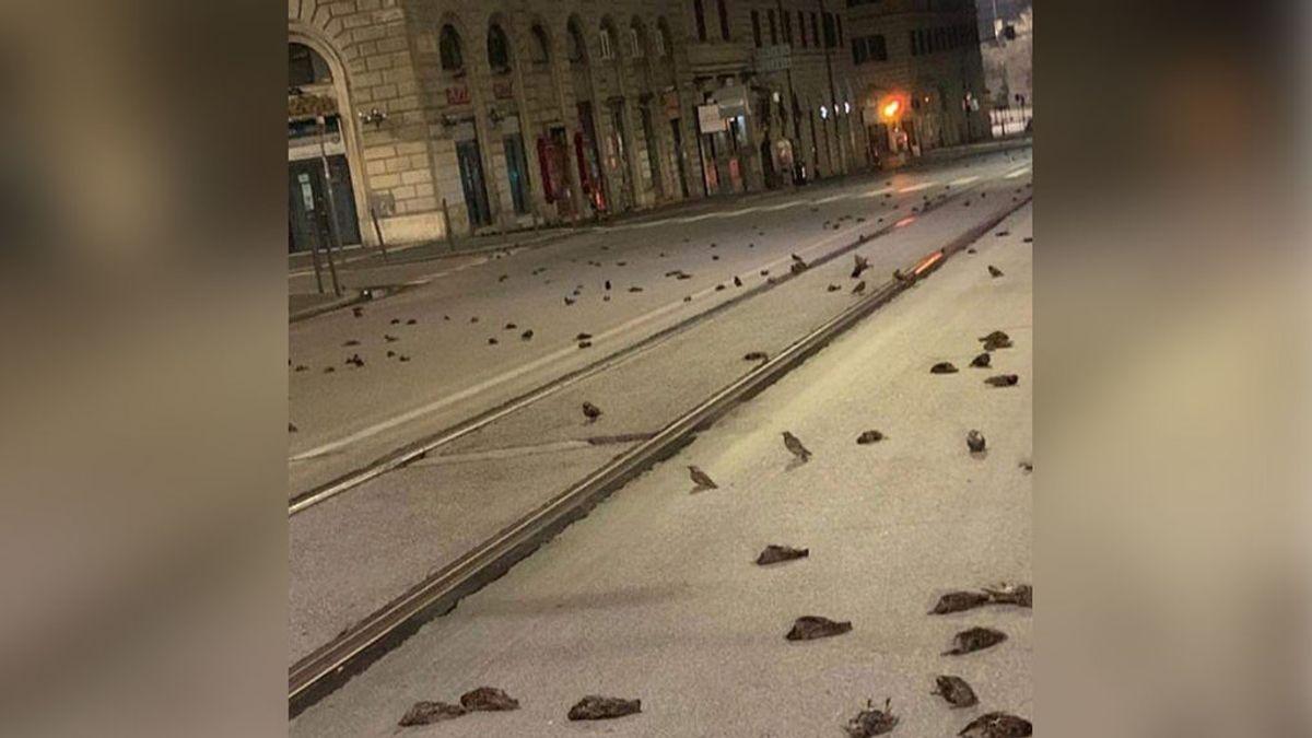 Cientos de pajaros aparecen muertos en Roma el día de Año Nuevo