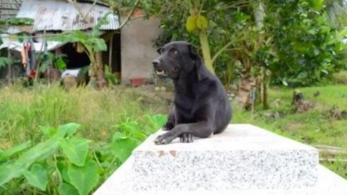 Un perro visita a diario la tumba de su dueño: un niño de dos años