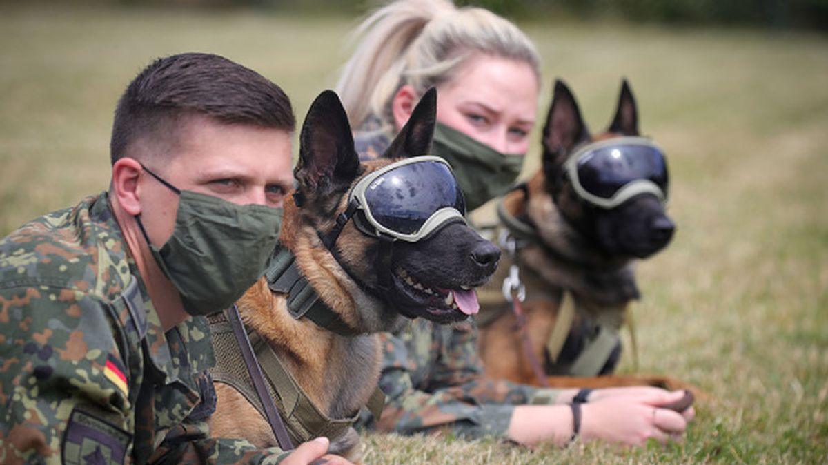 Aunque algunos ya trabajen, los perros anti-COVID-19 aún esperan para ayudar en la pandemia