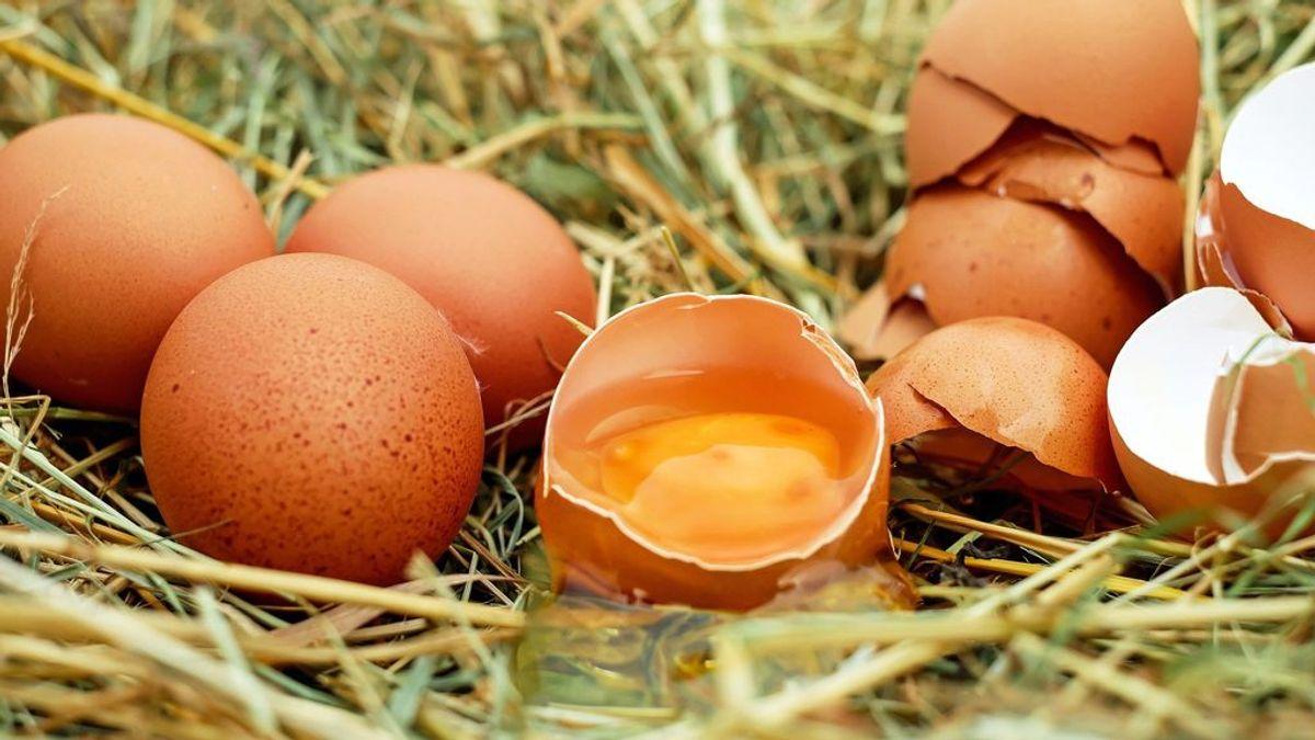 Cómo saber si un huevo está malo o se puede comer