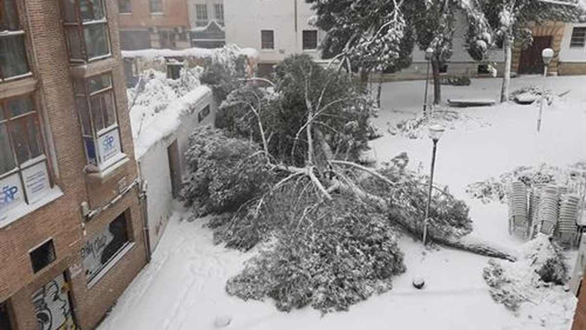 Alerta de riesgo extremo en la vía pública por caídas de árboles y desprendimientos en fachadas