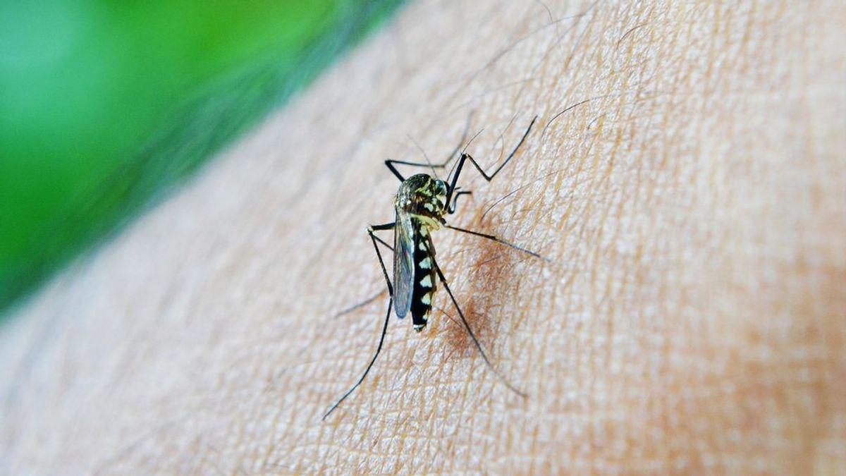 Descubren un anticuerpo capaz de bloquear virus del dengue y abre la puerta a una vacuna