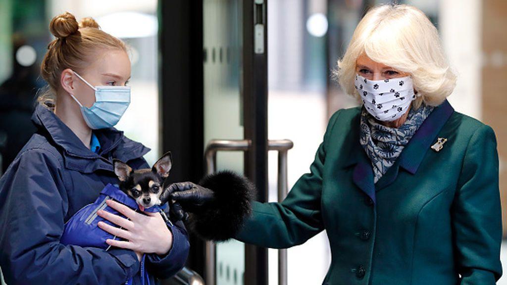 El confinamiento dispara la venta de mascotas en Reino Unido