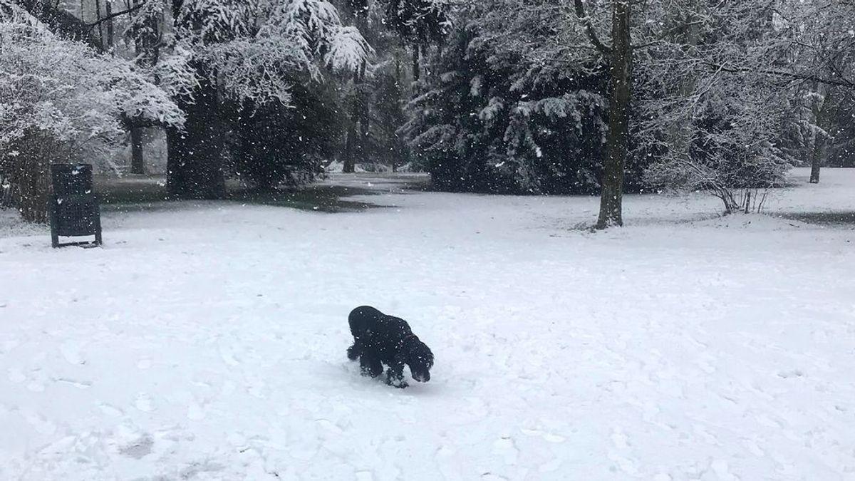 Los perros también sufren la ola de frío: tabla de temperaturas bajo cero que pueden soportar