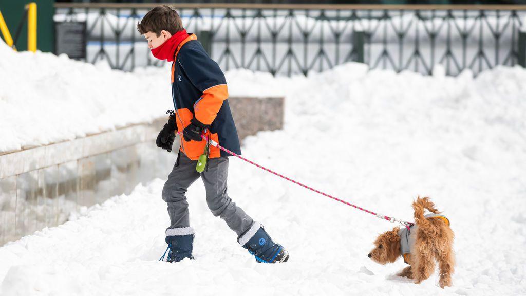 Perro pequeño en la nieve.