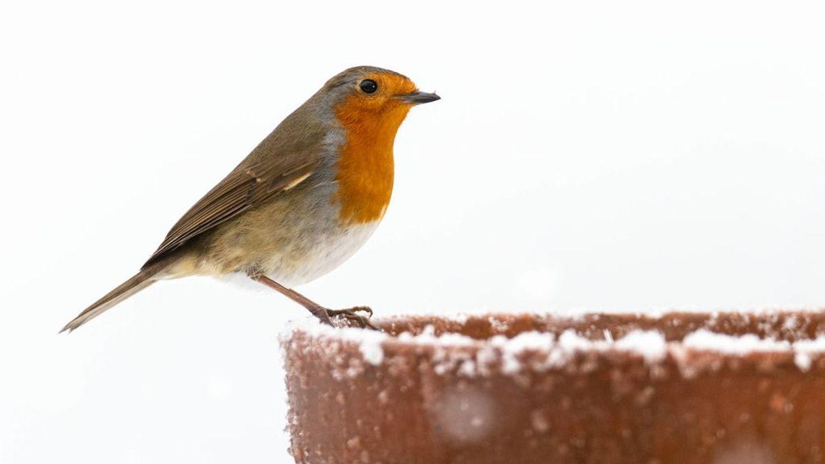 Los pájaros, en peligro por inanición durante la borrasca: consejos para darles de comer y fabricar un comedero
