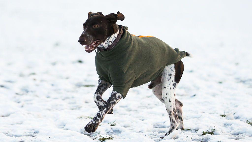 ¿Cómo proteger a las mascotas del frío?