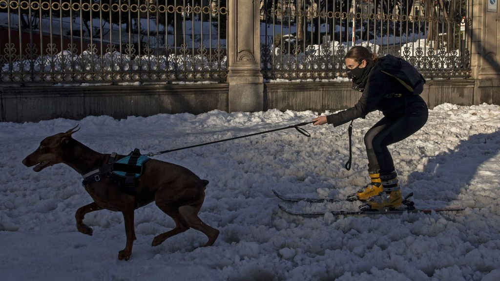 Perro mediano en la nieve
