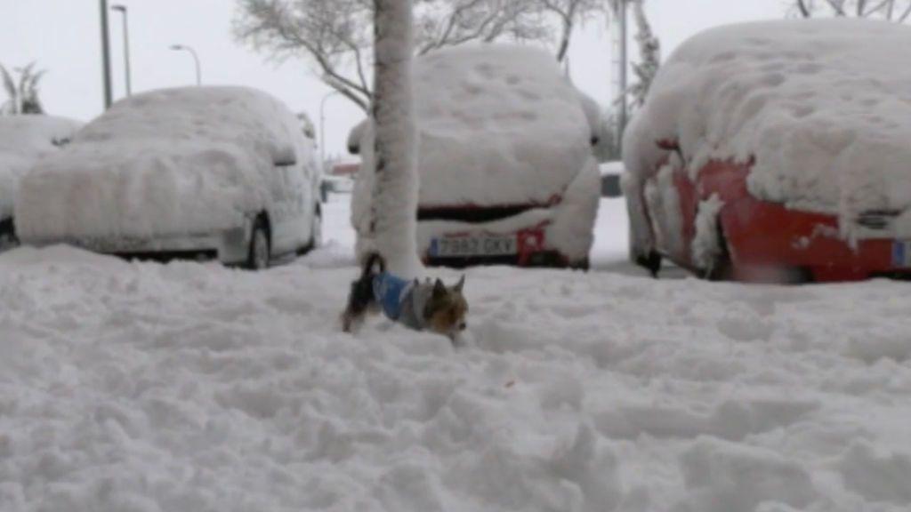 Protege a tus mascotas del frío extremo