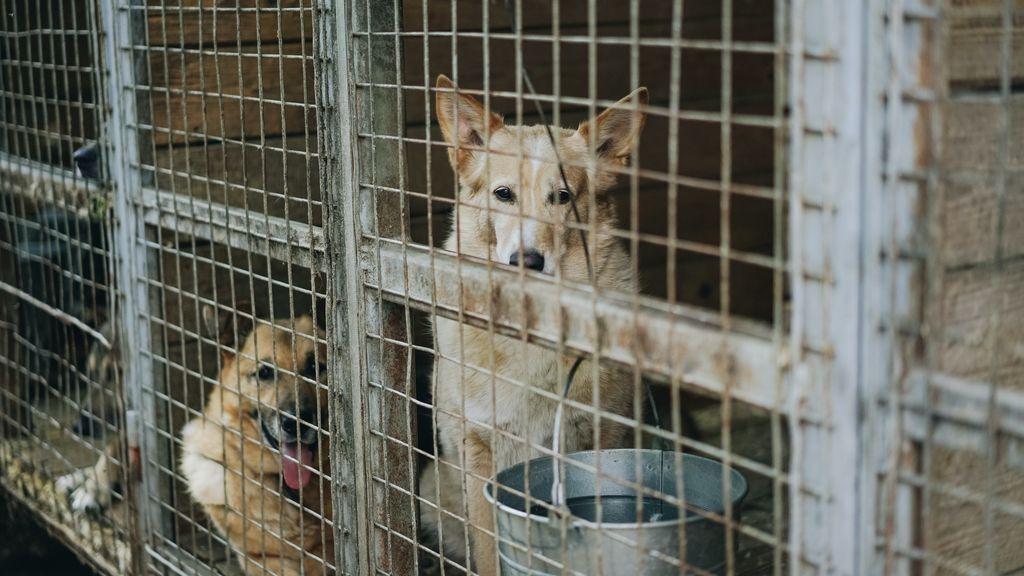 Más de mil euros al año: mantener a un perro no está al alcance de todos los bolsillos
