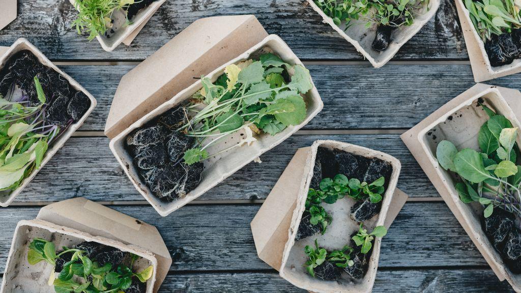 Productos biodegradables, la llave hacia un mundo más verde