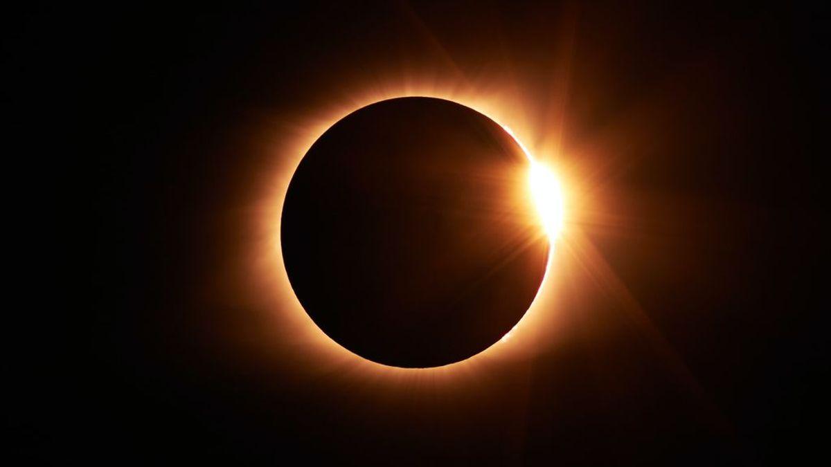 Alerta, mascotas: cómo actuar con nuestros compañeros peludos en caso de eclipse