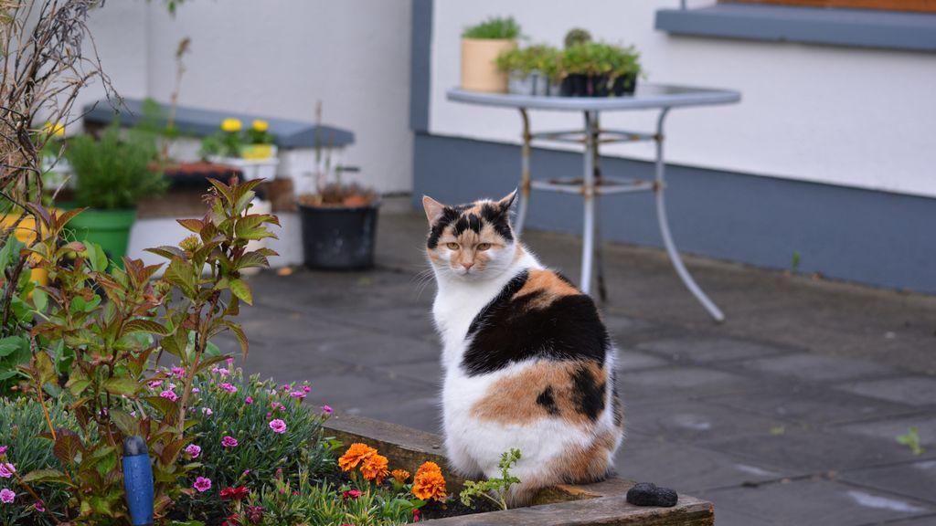Tan bonitas como inseguras: plantas de invierno peligrosas para las mascotas