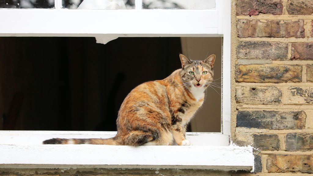 Adoptar a un gato: 5 cosas que debes saber antes de tomar la decisión