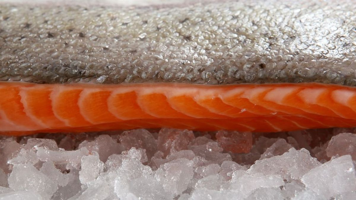 Cómo congelar pescado y marisco de forma segura