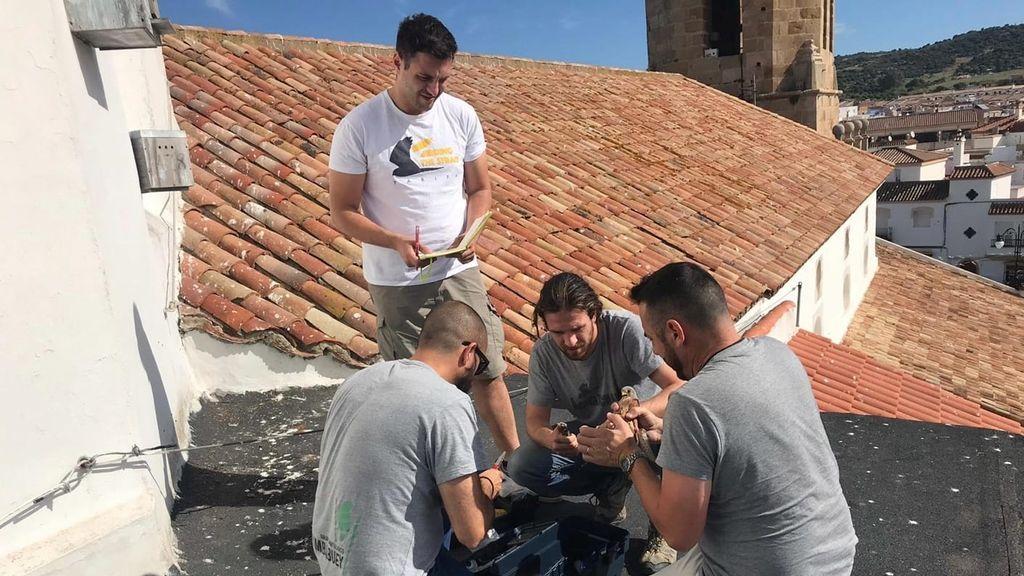El grupo de anillamiento en el tejado de la iglesia