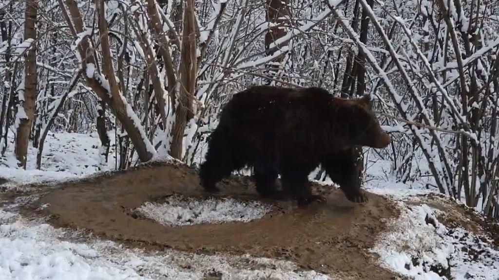 La triste historia del oso 'atrapado' en una jaula imaginaria tras 20 años en un zoo