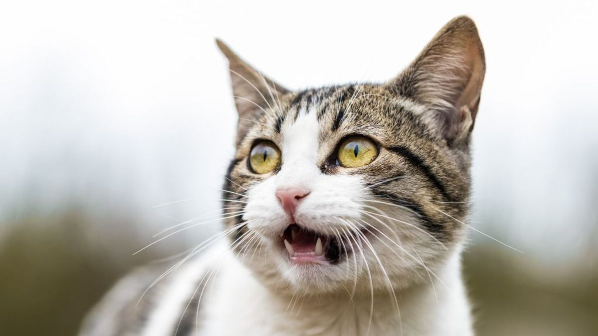 Gatopregunta: ¿Mi minino puede comer comida para perro? ¿Y qué pasa si es al revés?