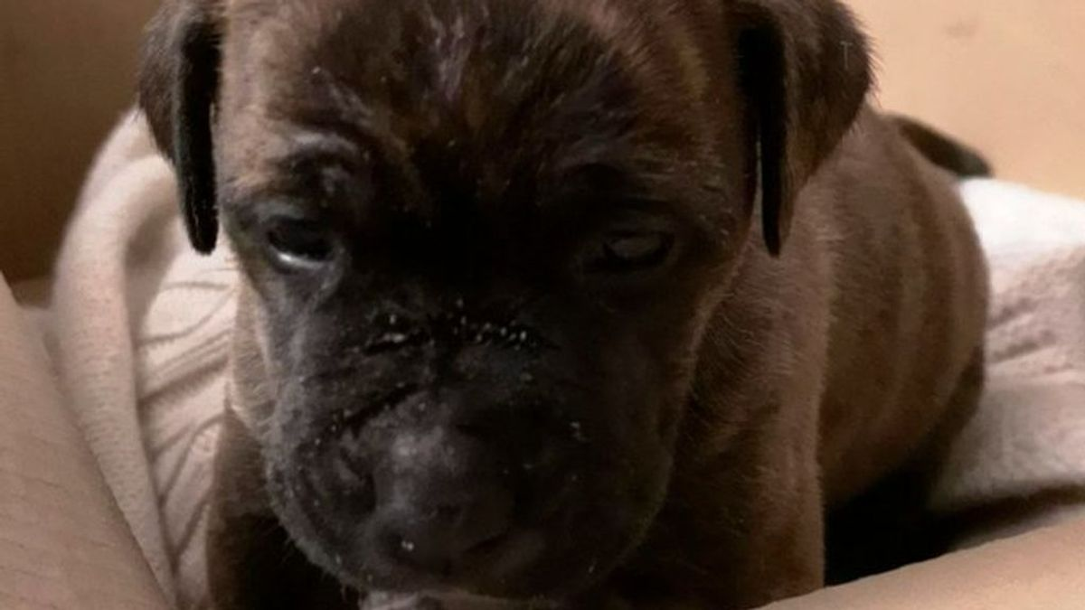 Hope: el perrito de un sintecho decomisado por la policía