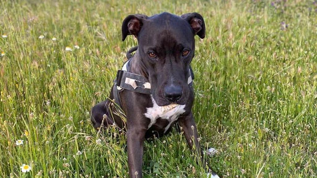 Brutus sigue desaparecido: se busca a un perro que huyó asustado con la explosión de la calle Toledo