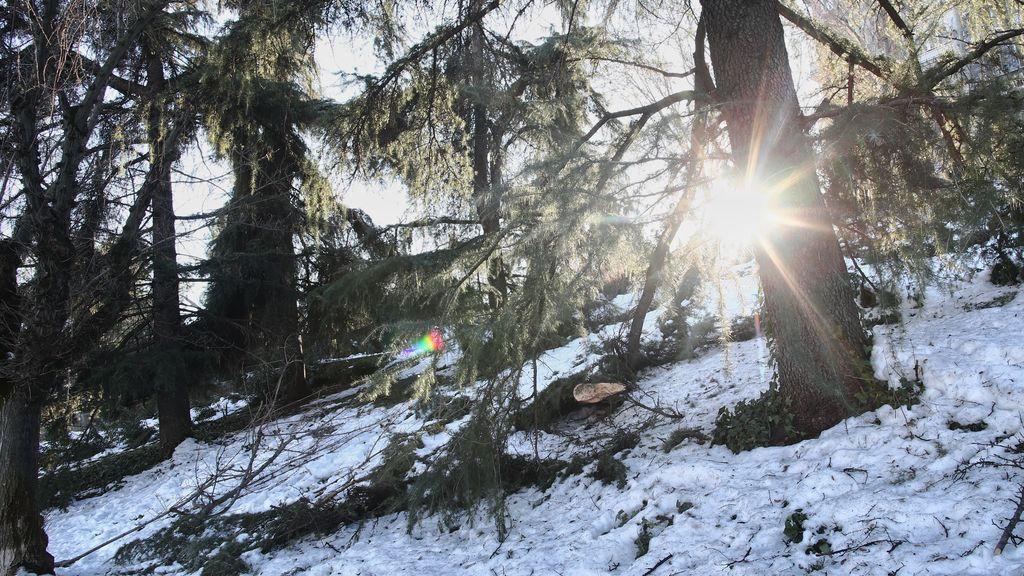 Combustible de incendios y fuente de plagas forestales: retirar los árboles que tumbó Filomena es una urgencia