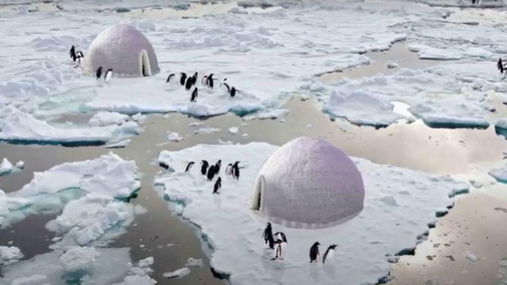 Iglús para pingüinos: el proyecto que podría ayudar a su reproducción mientras frena el deshielo en la Antártida