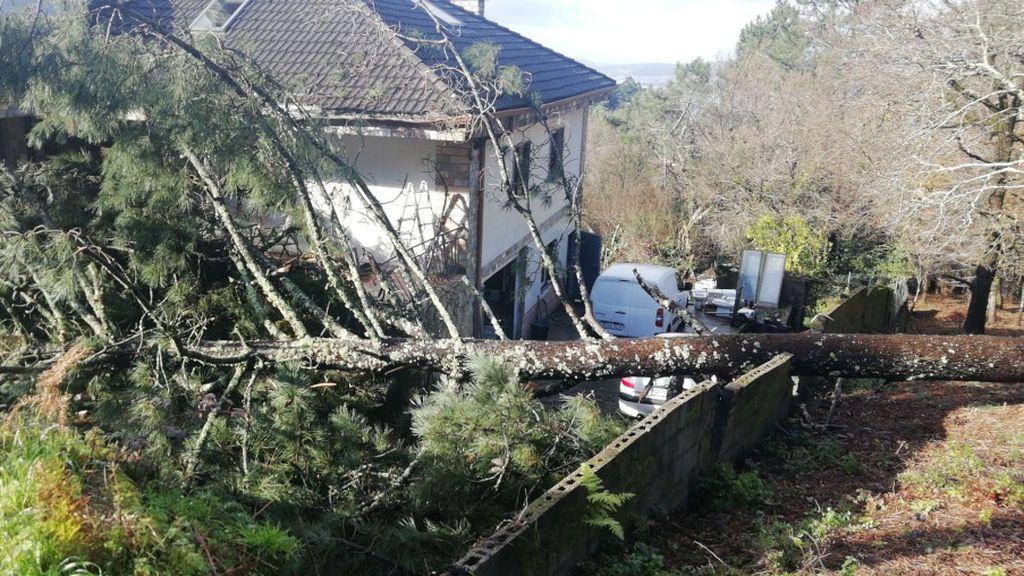 El pino ha causado desperfectos en el muro, en el porche y en un par de coches