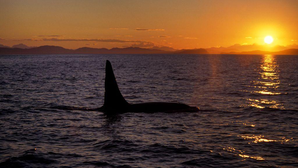El sol vuelve a la ciudad más septentrional de Alaska tras 66 días en penumbra