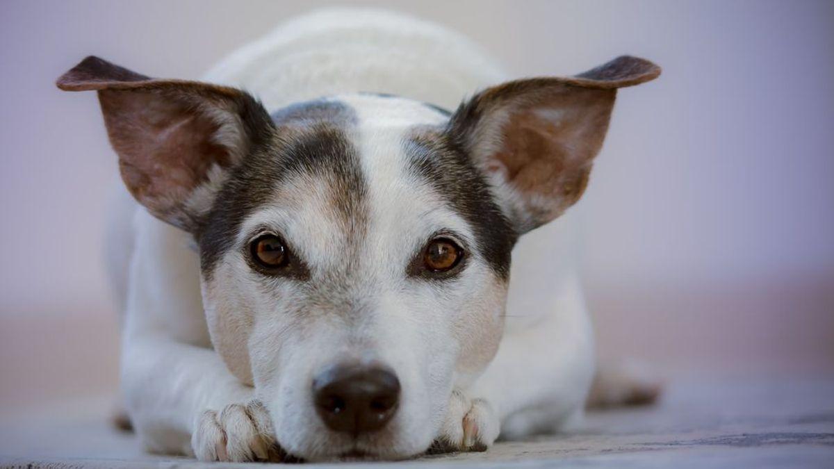 El mejor amigo del hombre: una perra espera toda una semana en la puerta de un hospital la salida de su dueño