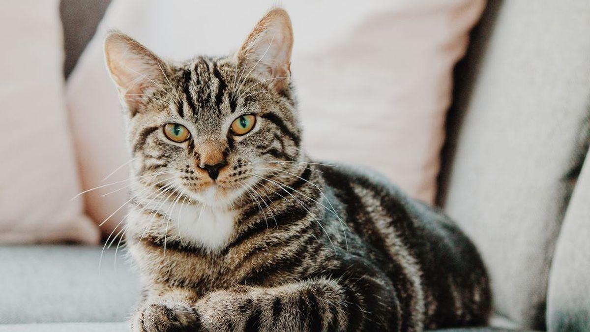 ¿Por qué el gato oculta sus heces? Motivos por los que tu mascota no quiere que veas su caca
