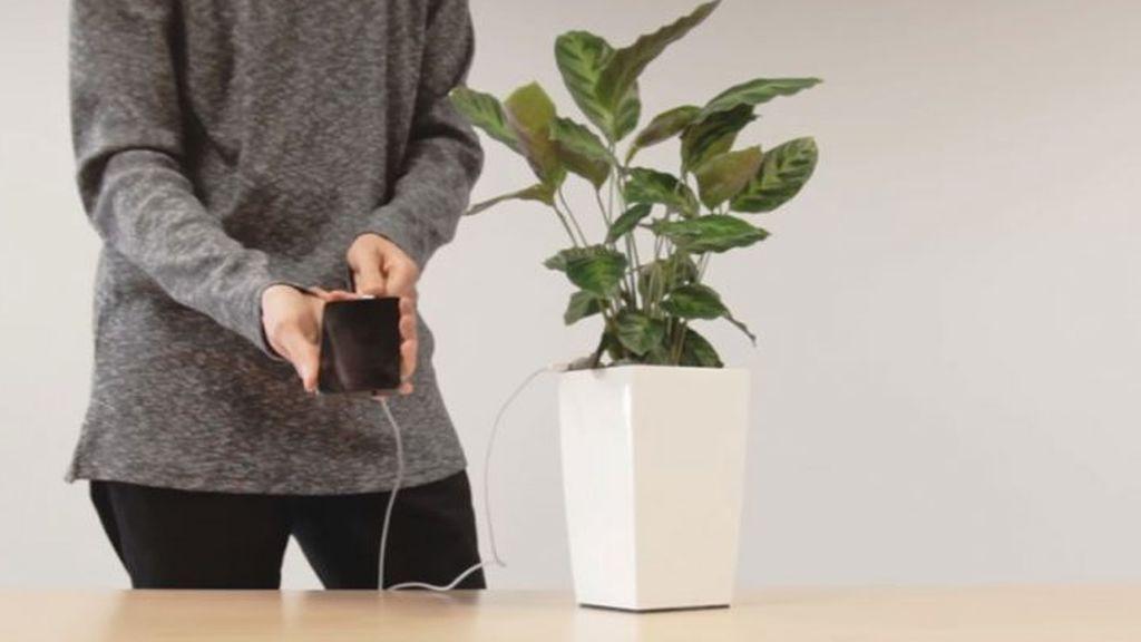 Una start-up española utiliza la fotosíntesis de las plantas para generar electricidad
