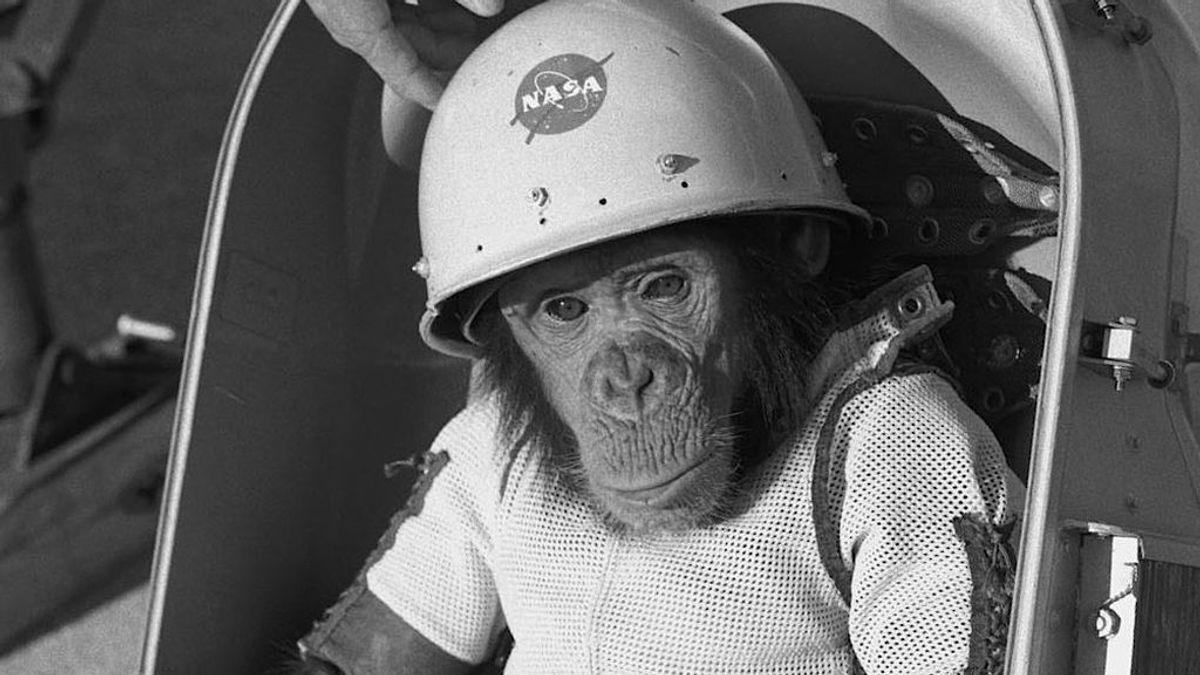 Se cumplen 60 años del vuelo de Ham, el primer primate en el espacio